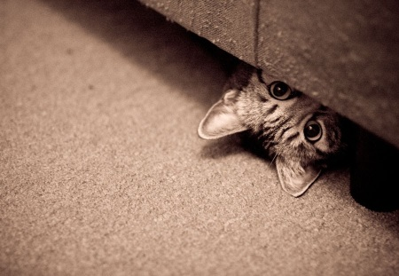cat-looking-from-under-the-bed
